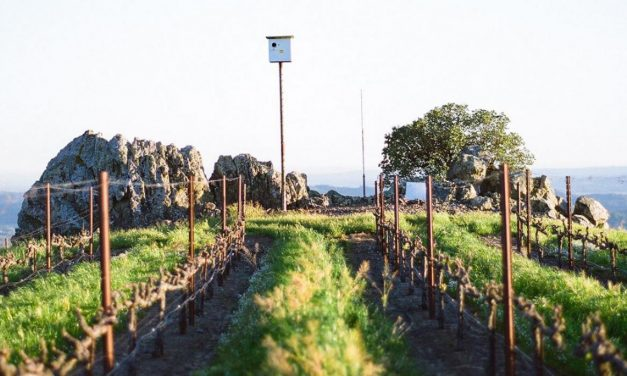 Sustainability by the Glass: When reds and whites are green