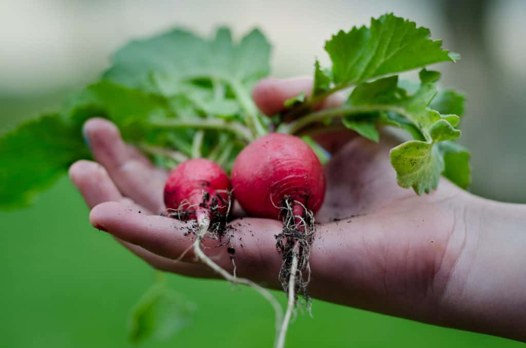 Restore Our Earth: The Avoidable Cost of Food Waste Along the Food Chain